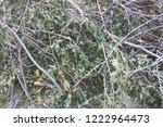felled tree branches  felling ... | Shutterstock . vector #1222964473