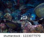 wild hawksbill turtle | Shutterstock . vector #1223077570
