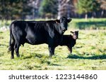 black angus cow and calf in a... | Shutterstock . vector #1223144860