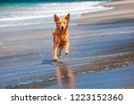 photo of golden retriever... | Shutterstock . vector #1223152360
