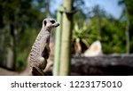 cute meerkat with nature | Shutterstock . vector #1223175010