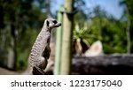 cute meerkat with nature | Shutterstock . vector #1223175040