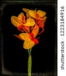 An Image Of A Canna Lily Which...