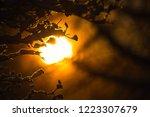 Looking Towards The Sun Throug...