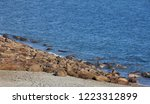walrus haul out on arctic beach ... | Shutterstock . vector #1223312899