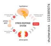stress response system.... | Shutterstock .eps vector #1223385076