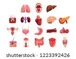 human internal organs sett ... | Shutterstock .eps vector #1223392426