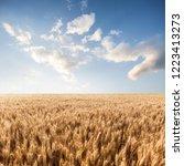 wheat in the farm | Shutterstock . vector #1223413273