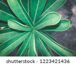 green leaves background | Shutterstock . vector #1223421436
