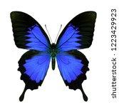 Dark blue swallowtail butterfly ...