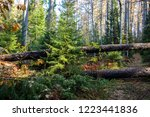 wilderness forest trees view.... | Shutterstock . vector #1223441836