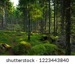 hardly visible trail on green... | Shutterstock . vector #1223443840