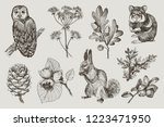 collection of highly detailed... | Shutterstock .eps vector #1223471950