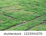 healthy grass growing in soil... | Shutterstock . vector #1223541070