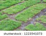 healthy grass growing in soil... | Shutterstock . vector #1223541073