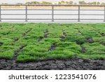 healthy grass growing in soil... | Shutterstock . vector #1223541076