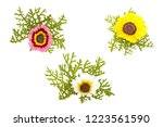 set of three flowers tricolor... | Shutterstock . vector #1223561590