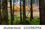 beautiful autumn landscape with ... | Shutterstock . vector #1223582956