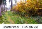 beautiful autumn landscape with ... | Shutterstock . vector #1223582959