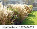 urban photography  a lawn is an ... | Shutterstock . vector #1223626699