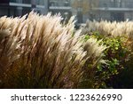 urban photography  a lawn is an ... | Shutterstock . vector #1223626990