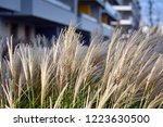 urban photography  a lawn is an ... | Shutterstock . vector #1223630500