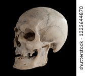 anatomical  real human skull ...   Shutterstock . vector #1223644870