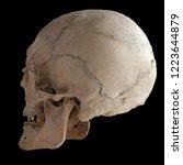 Anatomical  Real Human Skull ...