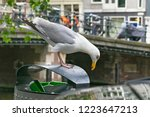 large european herring gull ... | Shutterstock . vector #1223647213