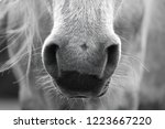 part of the horse | Shutterstock . vector #1223667220
