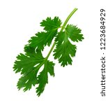 fresh green parsley leaf ... | Shutterstock . vector #1223684929