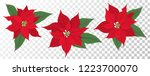 Red Poinsettia Vector Flowers...