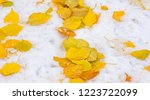 the first snow  late autumn ... | Shutterstock . vector #1223722099