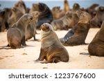 seal colony in walvis bay | Shutterstock . vector #1223767600