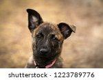portrait of a dutch shepherd... | Shutterstock . vector #1223789776