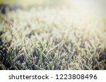 a green grass in frost   Shutterstock . vector #1223808496