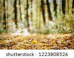 autumn forest trees. nature...   Shutterstock . vector #1223808526