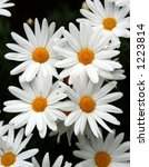 spring flowers | Shutterstock . vector #1223814