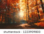 an avenue in the forest in... | Shutterstock . vector #1223909803