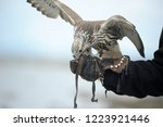 falcon glove on hand | Shutterstock . vector #1223921446