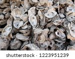 Discarded shucked oyster half shells in Apalachicola Bay, Florida / USA