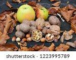 heap of walnuts and hazelnuts ... | Shutterstock . vector #1223995789