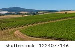 vineyard canobolas  a large... | Shutterstock . vector #1224077146