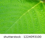 dew drops on leaves in the... | Shutterstock . vector #1224093100