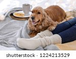 cute cocker spaniel dog with... | Shutterstock . vector #1224213529