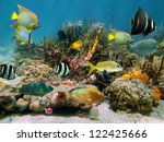 Colorful Tropical Fish...