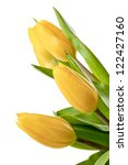 Three Tulips In A Cropped Image