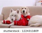 Cute Dogs In Warm Sweaters On...