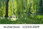 ducks under a weeping willow...   Shutterstock . vector #1224313009
