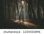 "speulderbos the ""dancing"" trees ... 
